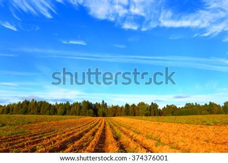 Farmer field - stock photo