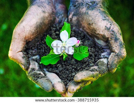 Farmer hand holding a fresh young plant with flower. Symbol of new life and environmental conservation - stock photo
