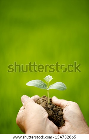 Farmer hand with a seedling - stock photo