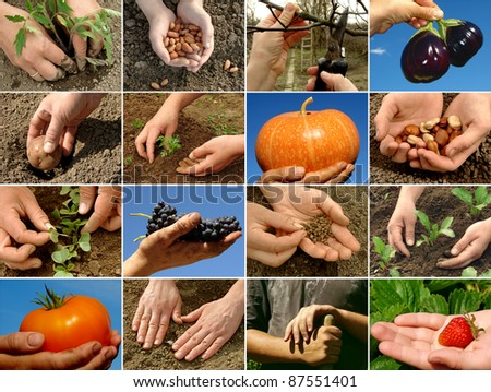 farmer hands in action - stock photo