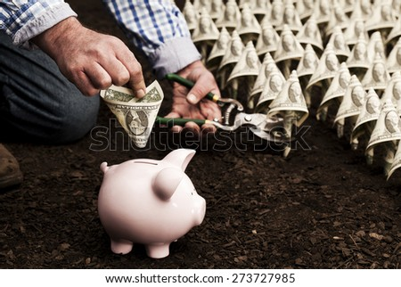 Farmer harvesting money Business and investment concepts - stock photo