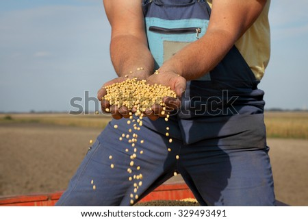 Farmer hold soybean crop in hands after harvest - stock photo