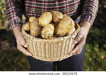 Farmer holding a basket full of harvested potatoes - stock photo