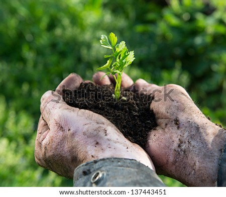 Farmer holding a green young plant. Symbol of spring and new life. - stock photo