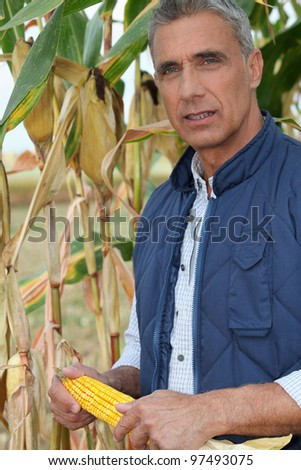 farmer holding a maize ear - stock photo