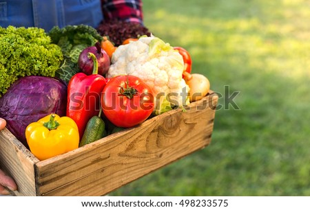 farmer holding box with fresh organic vegetables