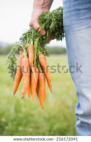 Farmer holding bunch of organic carrots on a sunny day - stock photo