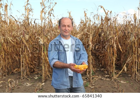 Farmer holding corn cobs in hands in front of corn plant