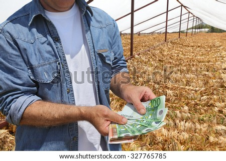 Farmer holding Euro banknote with  tobacco drying in tent, rural area