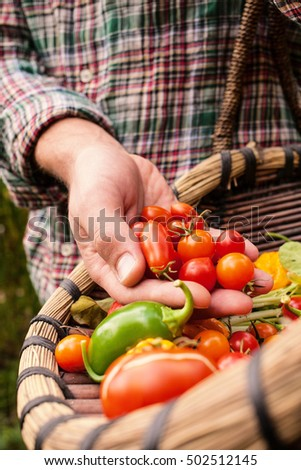 Farmer holding fresh picked vegetables, produce in hand