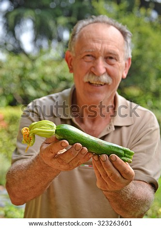 Farmer holding fresh zucchini from crop field.
