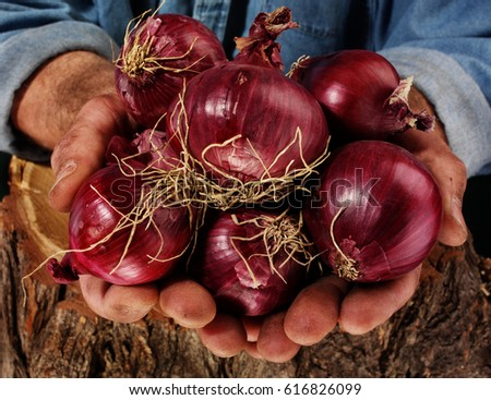FARMER HOLDING RED ONIONS