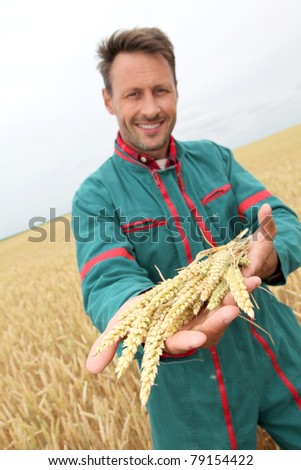 Farmer holding wheat ears in cereal field