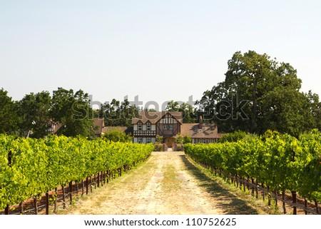 Farmer house in a vineyard - stock photo