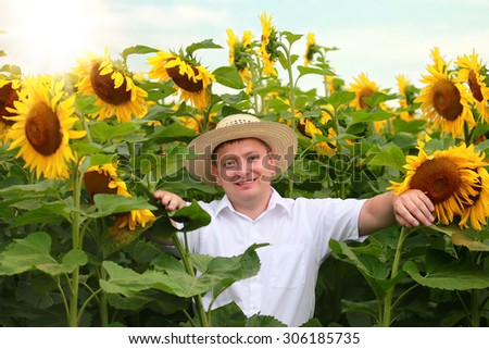 Farmer in a sunflower field, Ontario, Canada - stock photo