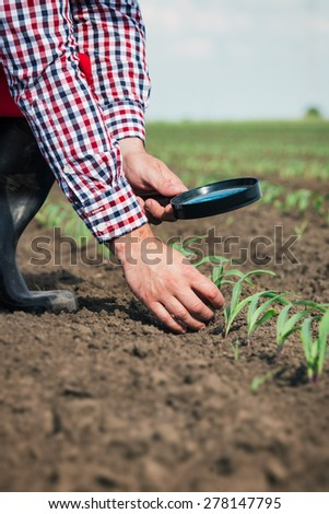 Farmer in field checking on corn