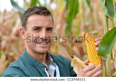 Farmer in field checking on corncobs - stock photo