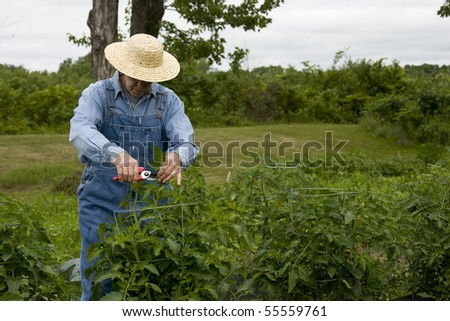 farmer in straw hat and bib overallls in garden - stock photo