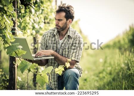 Farmer in vineyard using laptop - stock photo