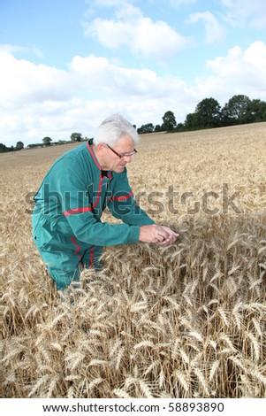 Farmer in wheat field - stock photo