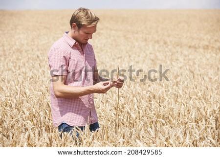 Farmer In Wheat Field Inspecting Crop - stock photo