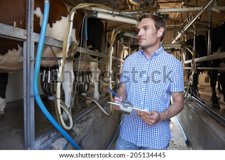 Farmer Inspecting Cattle During Milking - stock photo