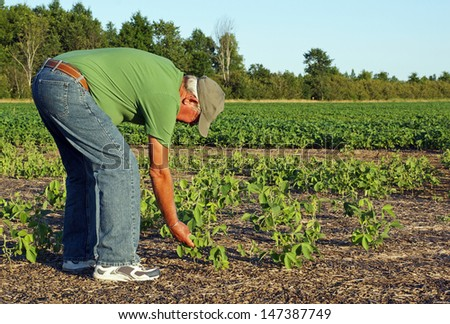 Farmer inspects what appears to be a poor crop of soy beans