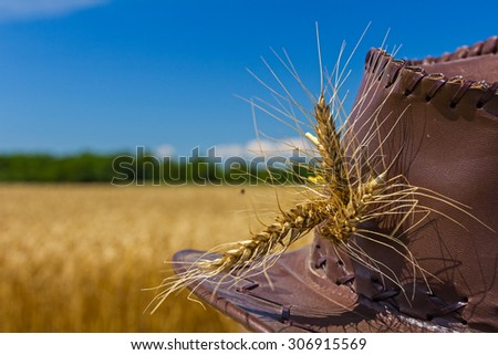 Farmer is looking his mature yellow grain in a farm field, close up on ears. - stock photo