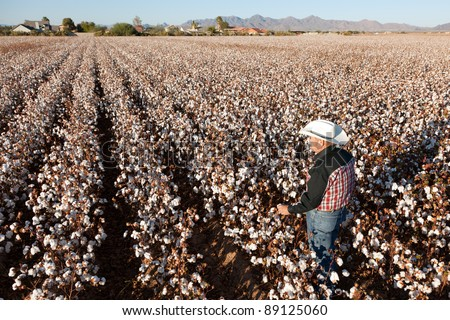 Farmer Looking Out Over a Field of Cotton - stock photo