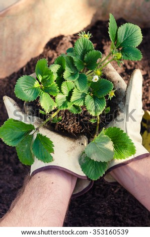 Farmer man hands holding a green young plant, getting ready for planting, eating seasonally growing your own food concept