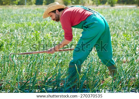 Farmer man working in onion orchard field with hoe tool - stock photo