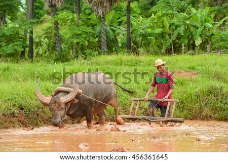 farmer on green fields holding buffalo worker plant rice baby,Thailand