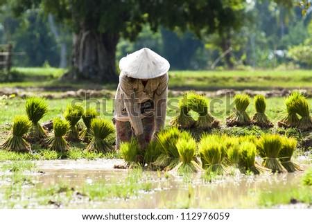 Farmer on the field in Laos - stock photo