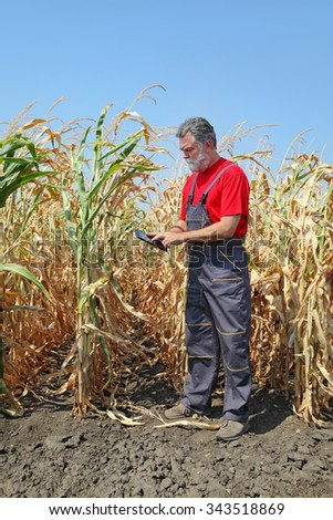 Farmer or agronomist examine corn plant in field using tablet, harvest time