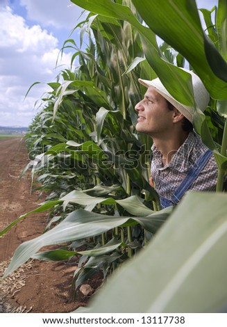 farmer peeking from a corn field - stock photo