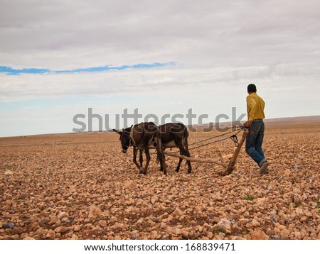 Farmer plowing the earth on donkeys - stock photo