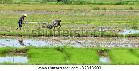 farmer preparing the ground for the growth of rice