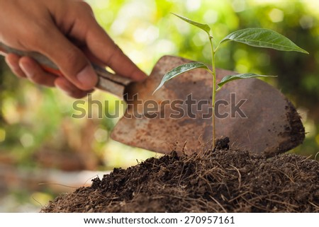 Farmer's hand holding shovel at  young plant - stock photo