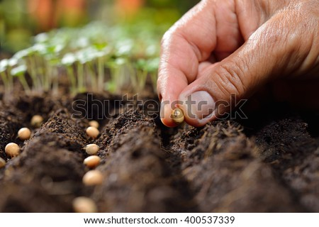 Farmer's hand planting seed in soil - stock photo