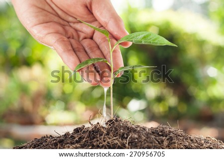 Farmer's hand watering a young plant with green bokeh background - stock photo