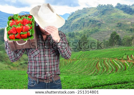 farmer shoulder on wooden box strawberry contain at front field with fresh farm agriculture - stock photo