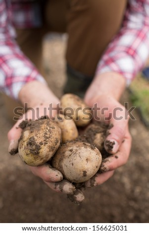 Farmer showing freshly dug potatoes outside in the farm - stock photo