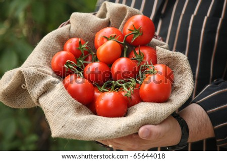 Farmer showing organic tomatoes - stock photo