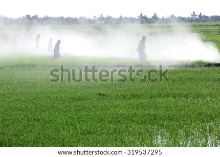 farmer spraying insecticide in paddy field - stock photo