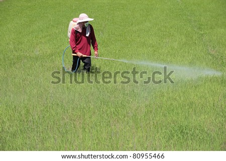 Farmer spraying pesticide on rice field - stock photo