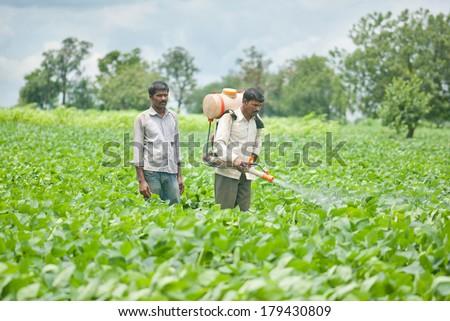 Farmer spraying pesticide on soya bean field, Salunkwadi, Ambajogai, Beed, Maharashtra, India - stock photo