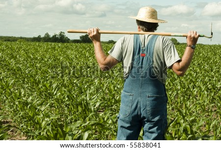 farmer standing in a corn field contemplating the job ahead