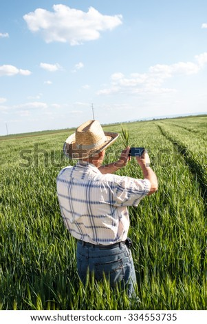 Farmer standing in a wheat field and taking picture of a field with phone