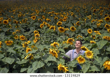 farmer standing in front of a sunflower field - stock photo