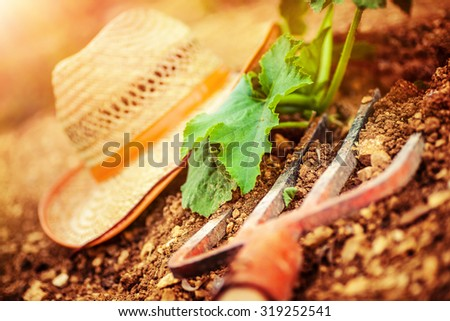 Farmer tools in the garden, pitchfork and straw hat lying down on the ground near fresh green plants, agriculture works, autumn harvest season concept - stock photo